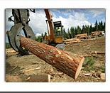 cutting and milling timber